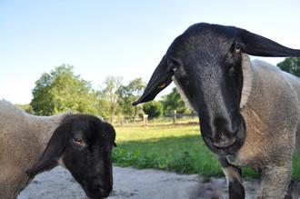 Was den Hirten mit seinen Schafen verbindet
